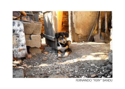 """Fernando """"Fery"""" Sandu"""